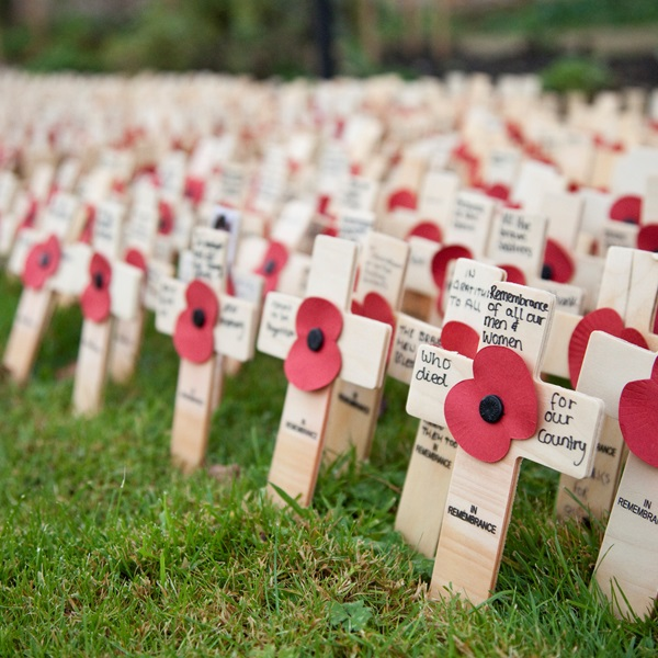 Tribute crosses from the Lydiard Park Field of Remembrance